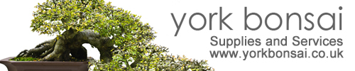 Weetrees Proudly sponsored by York Bonsai